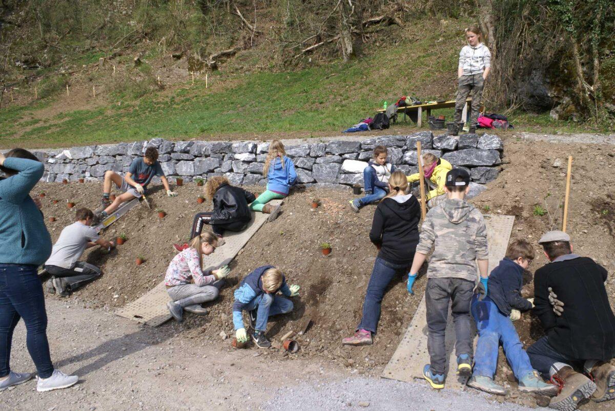 Eine Gruppe von Schülerinnen und Schülern verschiedenen Alters bepflanzen den Abschnitt vor der frisch erstellten Trockenmauer mit Jungpflanzen.