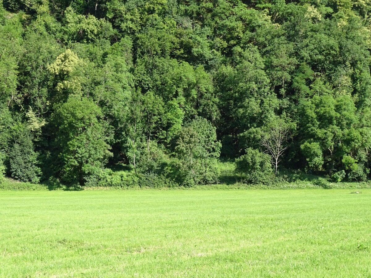 Blick auf einen eingewachsenen Waldrand mit einer zerfallenen Trockensteinmauer, kaum sichtbar