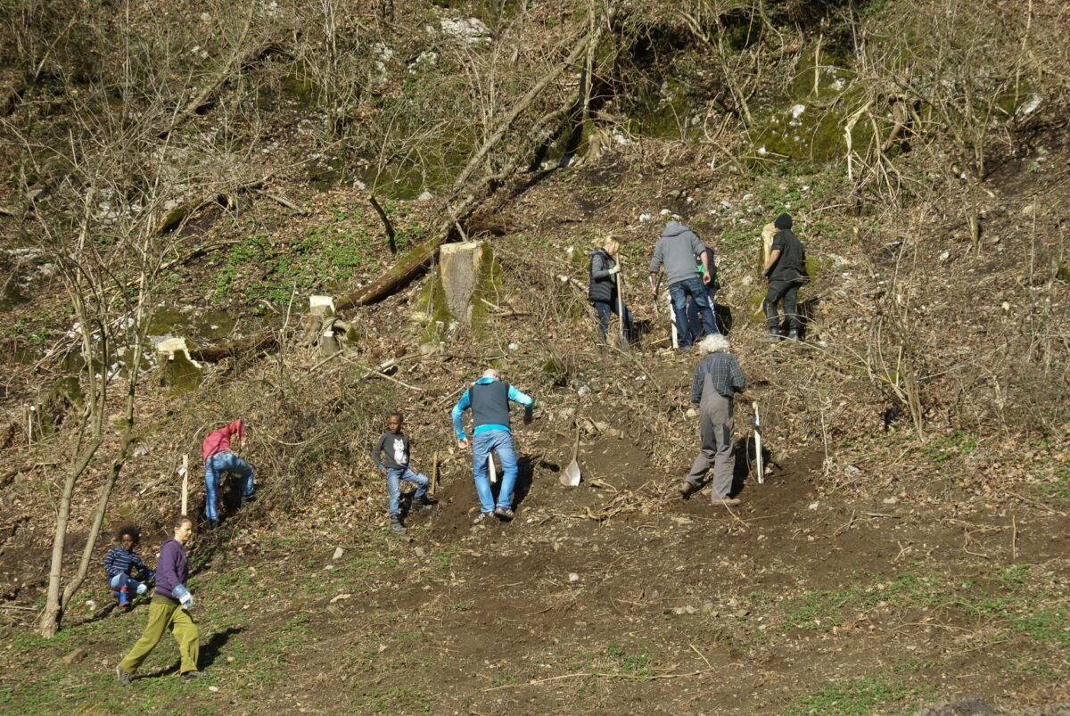 Eine Gruppe von Menschen pflanzt junge Sträucher am frisch abgeholzten Waldrand.